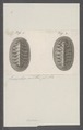 Chiton spec. - - Print - Iconographia Zoologica - Special Collections University of Amsterdam - UBAINV0274 081 06 0006.tif