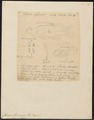 Chromis sparmanni - 1849 - Print - Iconographia Zoologica - Special Collections University of Amsterdam - UBA01 IZ14000064.tif