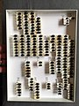 Chrysomelidae collection, Natural History Museum, London 206.jpg