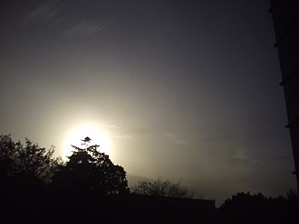Cirrostratus cloud - Image: Cirrostratus with mock sun