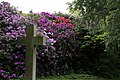 City of London Cemetery - flowering shrubs 06.jpg