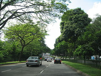 Clementi Road - Much of Clementi Road is lined by trees