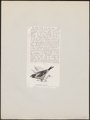 Coccothraustes melanura - 1872 - Print - Iconographia Zoologica - Special Collections University of Amsterdam - UBA01 IZ16000305.tif