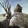 Collectie Nationaal Museum van Wereldculturen TM-20029508 Dolomiet met cactus Aruba Boy Lawson (Fotograaf).jpg