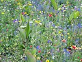 Colorful - panoramio.jpg