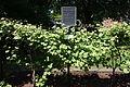 Concord grape memorial - Concord, MA -DSC07011.JPG