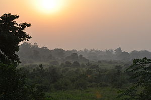 English: Evening sun in the Jim Corbett Nation...