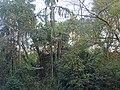 Covale Fort Jungle.jpg