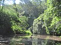 Creek in the Royal National Park number 4.jpg