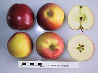 Cross section of Cagarlaou, National Fruit Collection (acc. 1949-141).jpg