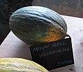 """Cucumis melo, """"melón azul"""", Villaconejos.jpg"""
