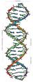 DNA Overview-es.png