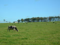 Dairying at Barrhill, Ayr - geograph.org.uk - 258030.jpg