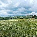 Daisy fields in April 2021.Asclepieion.jpg
