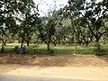 Dambulla, Sri Lanka - panoramio (15).jpg