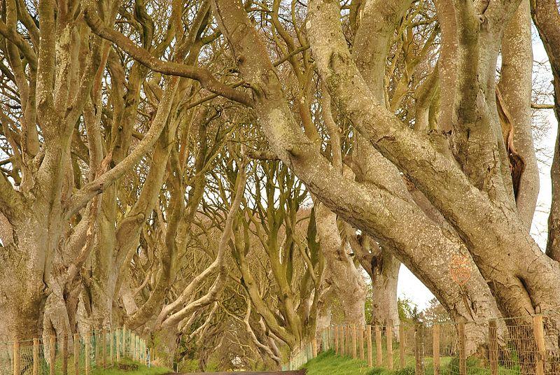 Fichier: Dark Hedges, comté d'Antrim, Irlande du Nord (6961405150) (2) .jpg