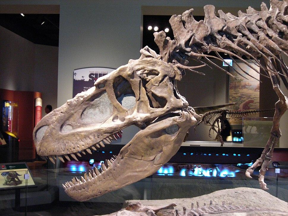 Daspletosaurus FMNH