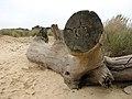 Dead tree on the beach, Covehithe - geograph.org.uk - 2144804.jpg