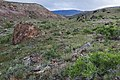 Deer Creek Canyon - Flickr - aspidoscelis.jpg