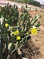 Desert flower 22.jpg