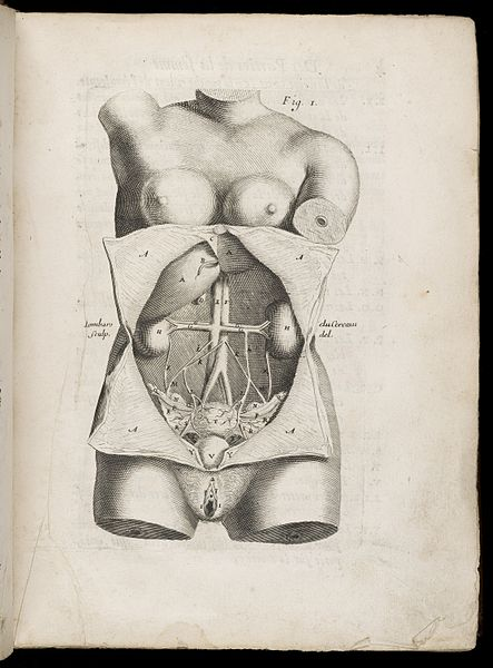 Pregnancy, Sex Hormones and the Liver