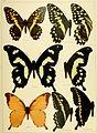 Die Gross-Schmetterlinge der Erde - eine systematische Bearbeitung der bis jetzt bekannten Gross-Schmetterlinge (1900) (14594361030).jpg