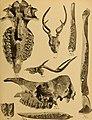 Die Pithecanthropus-Schichten auf Java. Geologische und paläontologische Ergebnisse der Trinil-Expedition (1907 und 1908), ausgeführt mit Unterstützung der Akademischen Jubiläumsstiftung der Stadt (20915542586).jpg