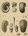 Die Versteinerungen des rheinischen Schichtensystems in Nassau. Mit einer kurzgefassten Geognosie dieses Gebietes und mit steter Berücksichtigung analoger Schichten anderer Lander (1850) (14597460840).jpg