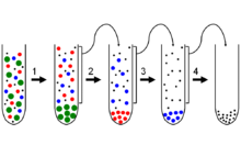 difference between differential and density gradient centrifugation