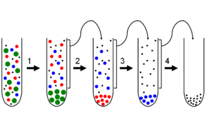Fractionation - Differential centrifugation.