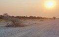 Dik-dik at Sunset (23890775778).jpg