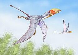 Reconstitution artistique de Dimorphodon macronyx