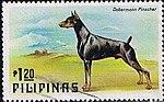 Doberman-Pinscher-Canis-lupus-familiaris Philippines 1979.jpg