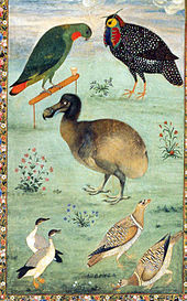 Painting of a dodo among native Indian birds