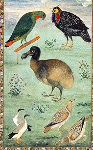stor fugl kryssord