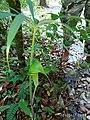 Dragon Plant.jpg