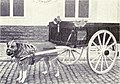 Draught Dog from 1915.JPG