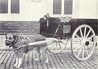 Drafting dog - A drafting dog. 1915.