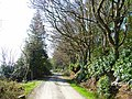 Driveway on north side of Whitefield Loch - geograph.org.uk - 173795.jpg