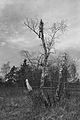 Duben vysenske kopce 34.jpg