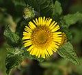 Durango - flower.jpg