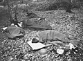 During the hot nights they sleep out in the open (4687987113).jpg