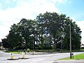 Dykes Hall Garden and Trees, Wadsley - Wisewood - geograph.org.uk - 919062.jpg