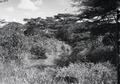 ETH-BIB-Bachlandschaft-Kilimanjaroflug 1929-30-LBS MH02-07-0286.tif