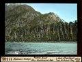 ETH-BIB-Nahuel Huapi, Puerto Blest, Alter Waldbrand-Rest-Dia 247-11303.tif