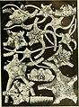 Echinodermata Ophiuroidea (1922) (21145522881).jpg
