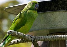 Photo of a green parrot sitting by a birdfeeder