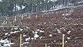 Electric Fence (An Sgòr Dubh) on Mar Lodge Estate (02APR13) (7).jpg