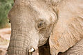 Elephant (3690384468).jpg