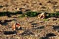 Empty Shells (80890387).jpeg